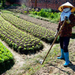 Hanoi Countryside Tour and Cooking Class | Asia Hero Travel