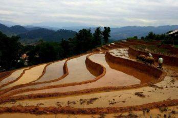 Trekking in Hoang Su Phi – Ha Giang