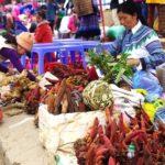 Bac Ha | Asia Hero Travel | Vietnam
