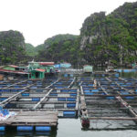 Lan Ha Bay 02 Days Trip | Halong Cruise | Asia Hero Travel